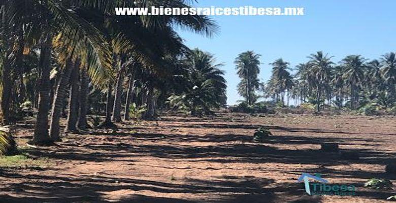 Mazatlan Beachfront Lands Stone Island
